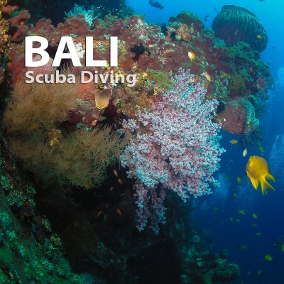 FULLBOARD 5D/4N BALI SCUBA DIVING PACKAGE