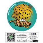 MALAYSIA MARINE LIFE_Juvenile Box Fish